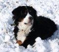 Pfotensitter: Hunde in Wipperfürth