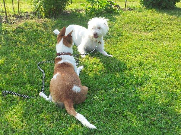 Erfahrene Hundebetreuung