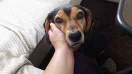 Liebevolle Hundebetreuung mit Familienanschluss!