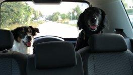zwei Hundedamen suchen zeitweise Betreuung