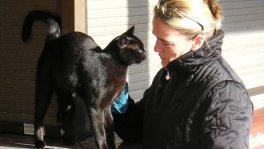 Liebevolle Katzenbetreuung zuhause mit Sachkundenachweis