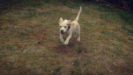 'Gassi-Service' und Betreuung von Hunden